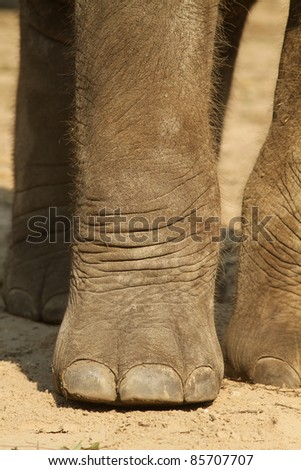 Close up of an elephants paw - stock photo