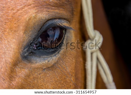 Close up of an eye of a by horse wearing a rope halter