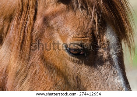 close up of an eye of a horse - stock photo