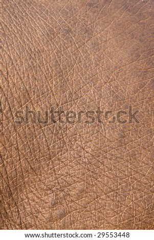 Close up of an Indian Elephants skin demonstarting it's intricate texture - stock photo