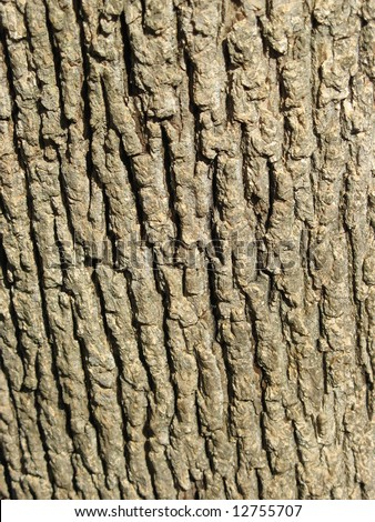 Close up of an oak tree trunk.