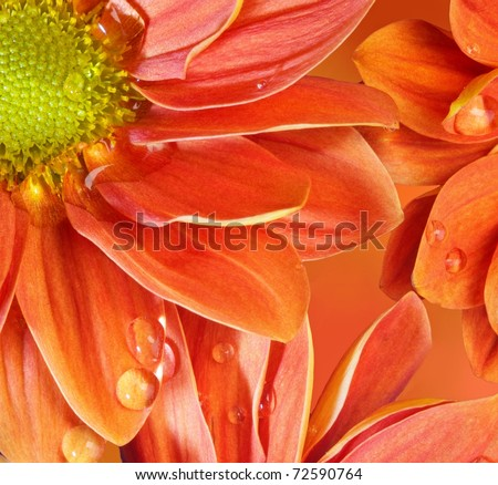 Close-up of an orange flowers - stock photo