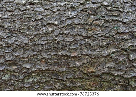 close-up of an pine tree's bark - stock photo
