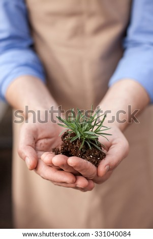 Close up of arms of gardener holding plant with ground in palms. The man is standing in apron at greenhouse - stock photo