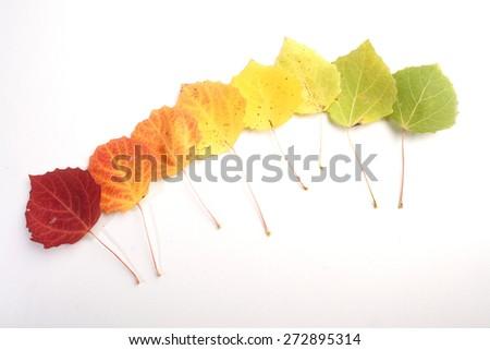Close-up of autumn leaf - studo shot - stock photo