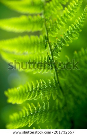 Close up of back lit fern leaf in bright green colors