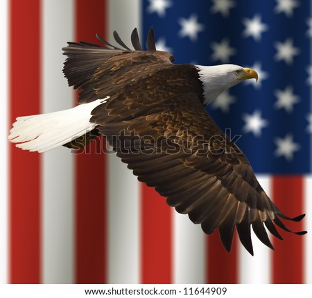 close up of bald eagle flying in front of american flag with vertical stripes and tight depth of field - stock photo