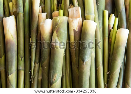 Close-up of bamboo shoots - stock photo