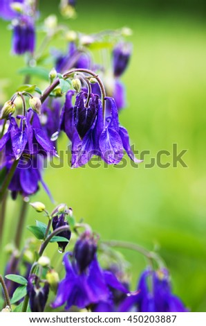 close-up of beautiful bell flowers in the forest
