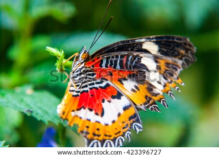 Close up of beautiful butterfly with outstretched wings on green plant