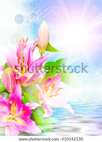 Close up of beautiful pink lilies flowers - stock photo