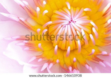 Close up of beautiful pink water lily