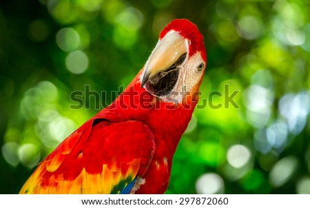 Close up of beautiful scarlet macaw parrot - stock photo
