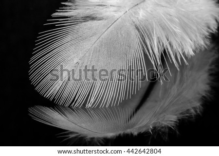 Close up of beautiful single white feather viewed from the side on black reflective background - stock photo