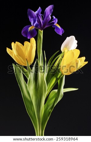 close-up of beautiful tulips and irises in a glass bottle on black background studio