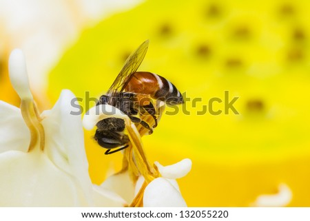 Close up of bee on flower