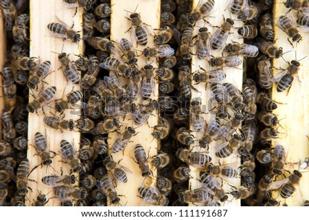 Close-up of bees living in a beehive