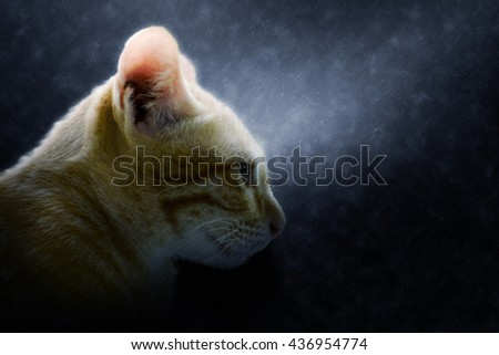 Close up of Bengal cat in the rains. - stock photo