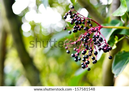 Close Up Of Berries