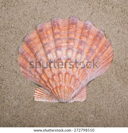 Close up of big Sea shell on sand background - stock photo