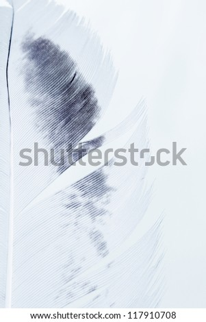 close up of bird feather isolated over white - stock photo