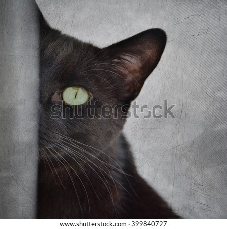 Close-up of Black Cat Peeking Around Corner