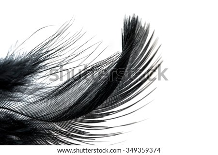 Close-up of Black feather isolated on white background - stock photo