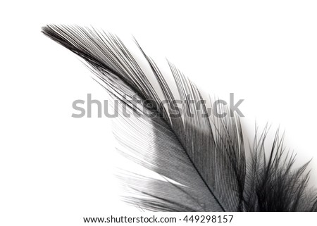 Close up of black feather isolated on white background