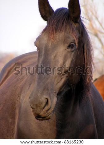 Close up of black horse