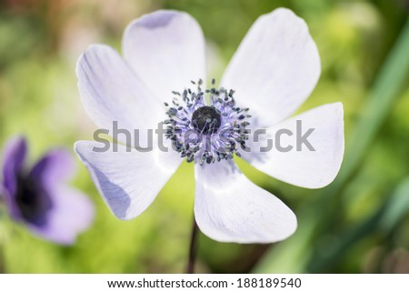Close Up of blossom of a flower / Flower - stock photo