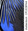 Close up of blue and black bird feathers in great details of texture background - stock photo