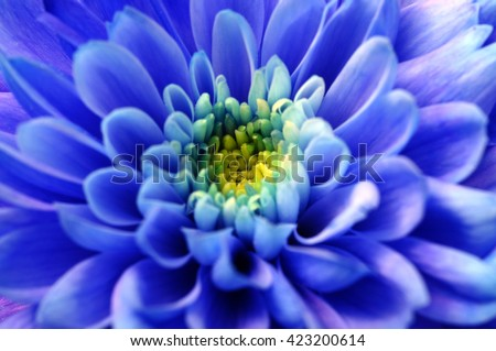 Close up of blue aster flower for background