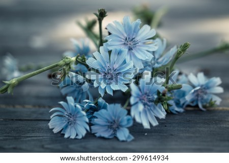 Close-Up Of Blue Chicory Flowers - stock photo