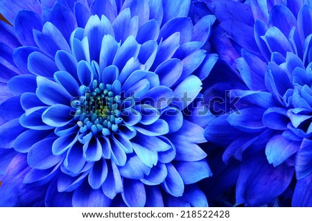 Close up of blue flower aster details for background - stock photo
