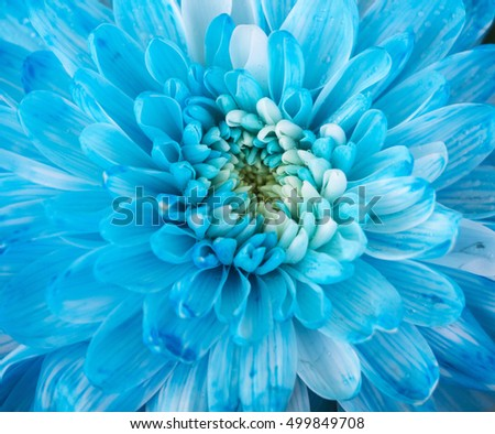 Close up of blue flower aster details for background