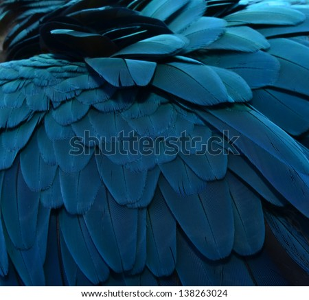 Close up of Blue Macaw Feathers - stock photo