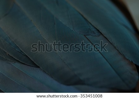 Close up of Blue Macaw Feathers