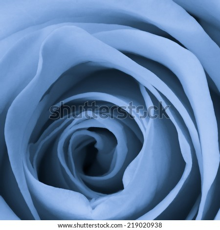 close up of blue rose petals - stock photo