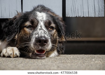 Close up of border collie wait for owner come back home at door