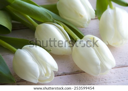 Close up of bouquet of white tulips laying on antique pink wooden table - stock photo