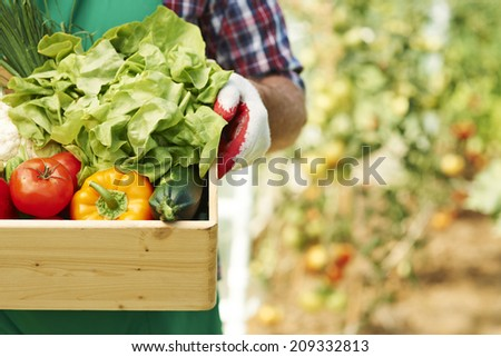 Close up of box with ripe vegetables