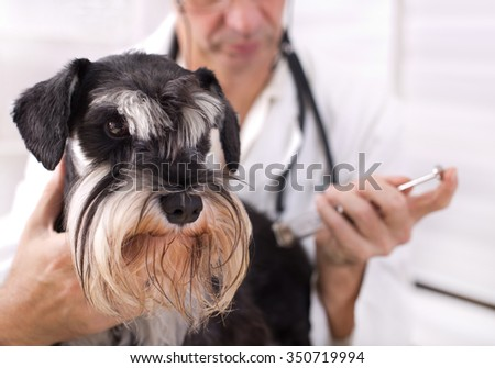 Close up of brave dog having injection at veterinary ambulance - stock photo