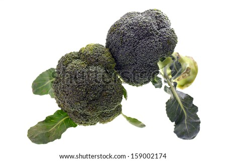Close up of broccoli vegetable isolated on white background - stock photo