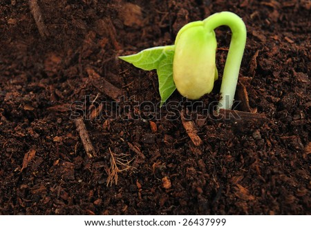 Close up of bud seedling in earth - stock photo