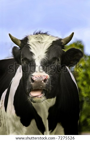 Close-up of bull. - stock photo