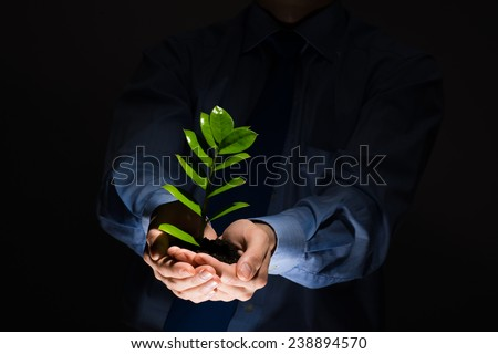 Close up of businessman hands holding small green sprout