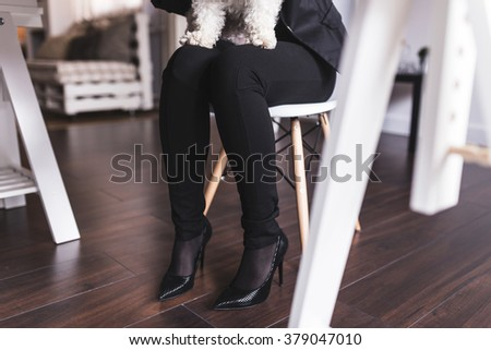 Close up of businesswoman legs wearing stilettos shoes and holding dog in her lap. Depth of field, selective focus - stock photo