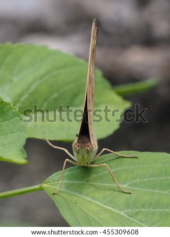 close up of butterfly with folded wings. - stock photo