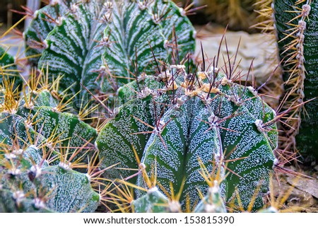Close-up of cactus in greenhouse of the botanical garden - stock photo