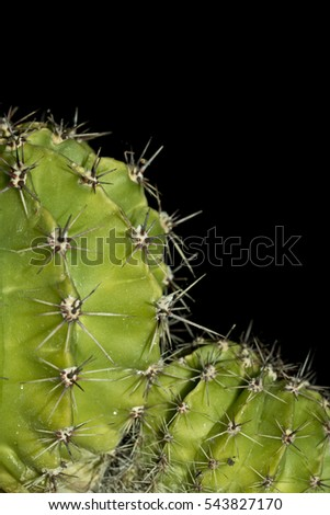 Close up of Cactus on Black Background